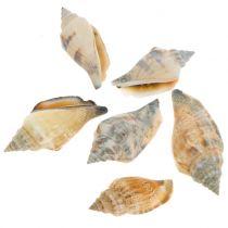 Mélange de coquillages naturel 3cm - 5cm 200g