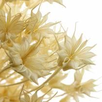 Gousse de graines de fleurs séchées Cumin noir blanchi 80g