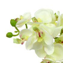 Orchidée verte claire 56 cm 6 p.