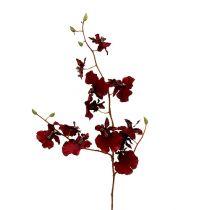Orchidée oncidium 70 cm rouge foncé 3 p.