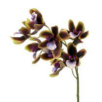 Orchidée Cymbidium vert, mauve L 38 cm 4 p.