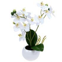 Orchidée en pot 30 cm blanc
