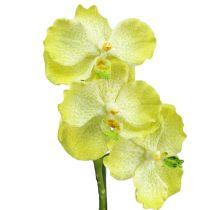 Orchidée avec racines, vert clair L 45 cm