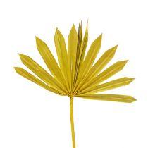 Palmspear Sun mini jaune 50pcs