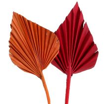 Lot de feuilles de palmier rouge orange 50 p.