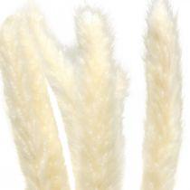 Crème d'herbe de pampa séchée pour le séchage du bouquet 65-75cm 6pcs