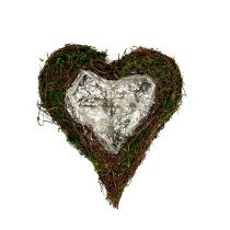 Plante coeur vigne, mousse 22cm x 25cm H7cm