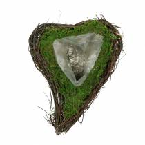 Plante coeur de vigne, mousse 22cm x 28cm H8cm