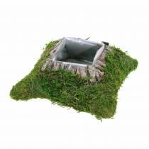 Coussin végétal mousse, écorce 20cm × 20cm