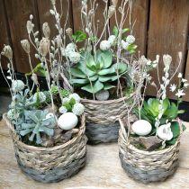 Panier à plantes, panier tressé pour la plantation, panier à fleurs rond naturel, gris Ø29 / 23,5 / 18cm, lot de 3