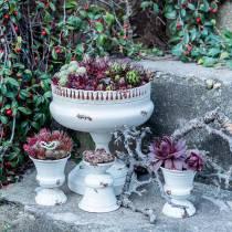 Coupe à Planter Calice Crème Antique Ø7.5cm H9cm 1p