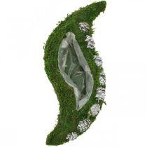 Jardinière mousse et cônes vert vague, blanc délavé 41×15cm