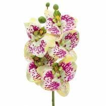 Branche d'orchidée artificielle Phaelaenopsis vert rose H49cm