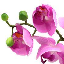 Orchidée Phalaenopsis fuchsia 77 cm