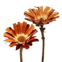 Repens rosace Super 10 - 12cm 20pcs