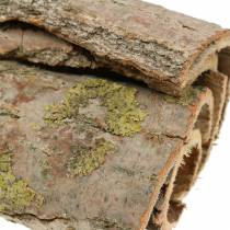 Écorce d'arbre pour l'artisanat naturel 13cm 1kg