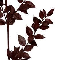 Brindilles de Ruscus rouge foncé 75cm - 95cm 1kg