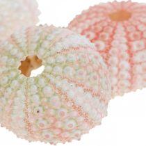 Décoration oursin rose maritime, blanc, vert décoration d'été 12pcs