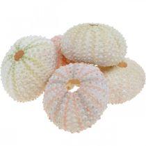 Déco maritime habitation oursin rose, déco éparpillée blanche 55pcs