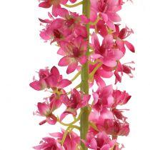 Cierge du désert lys des steppes fuchsia 106 cm