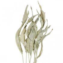 Feuilles de strelitzia séchées vertes givrées 45-80cm 10pcs