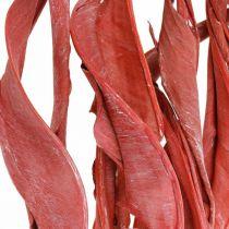 Strelitzia feuilles fleurs sèches givrées rouges 45-80cm 10pcs