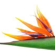 Strelitzia oiseau du paradis 95 cm