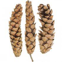 Pommes de pin Weymouth Pine Strobus Naturel Mixte 2.5kg