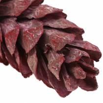 Cônes Strobus décoration naturelle rouge 15cm - 20cm 50pcs
