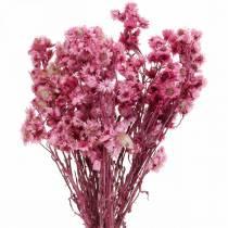 Fleurs séchées Bouquet de fleurs séchées roses Fleurs séchées Rose H21cm