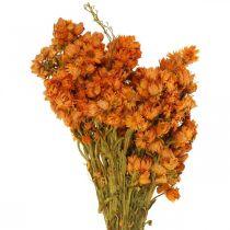 Fleurs Éternelles Fleurs Séchées Orange Petit 15g