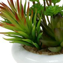 Succulente en pot Ø12cm H11cm 1P