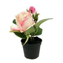 Rose en pot décoration de table crème 14 cm