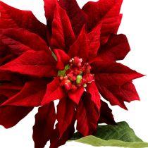Poinsettia rouge 70cm