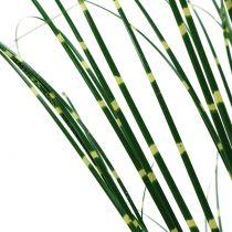 Herbe zébrée dans un pot vert 60cm
