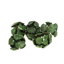 Zypressen Zapfen 3 cm vert 500 g