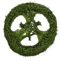 Tranches de luffa 5 - 7,5 cm 24 p. blanc-vert