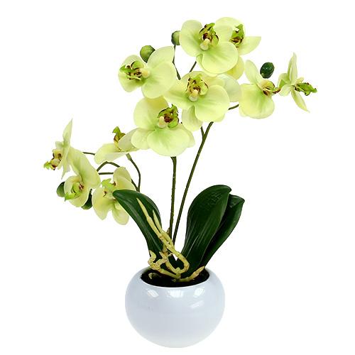 orchid e en pot vert h 30 cm boutique en ligne d accessoires pour fleuristes et d articles de. Black Bedroom Furniture Sets. Home Design Ideas