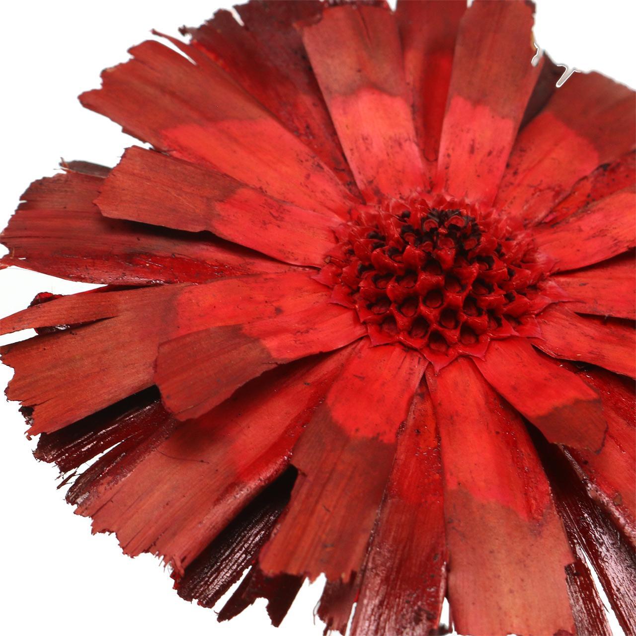 Rosace Repens rouge 8cm - 9cm 25pcs
