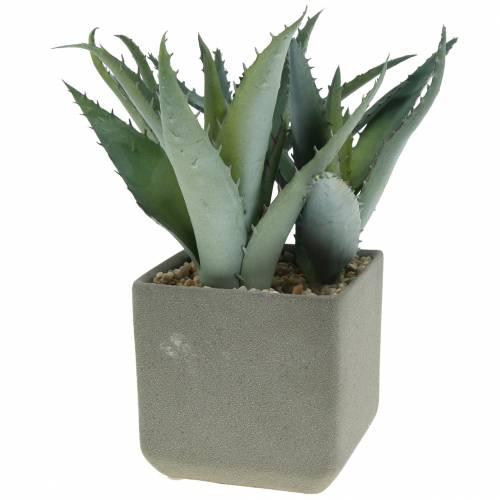 Agave dans un pot H17cm