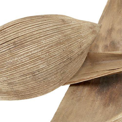 Coquilles de noix de coco blanchies 25pcs