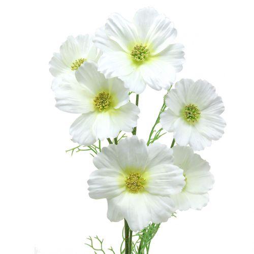 Cosmos bipenné blanc 77 cm 3 p.