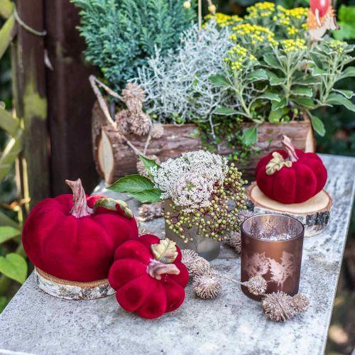 Déco citrouille rouge automne décoration polyrésine 15×12cm