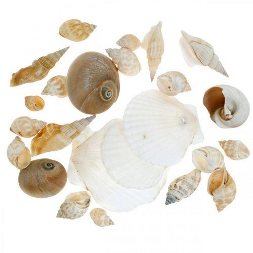 Coquilles d'escargot décoratives Escargots de mer Nature Décoration maritime 350g