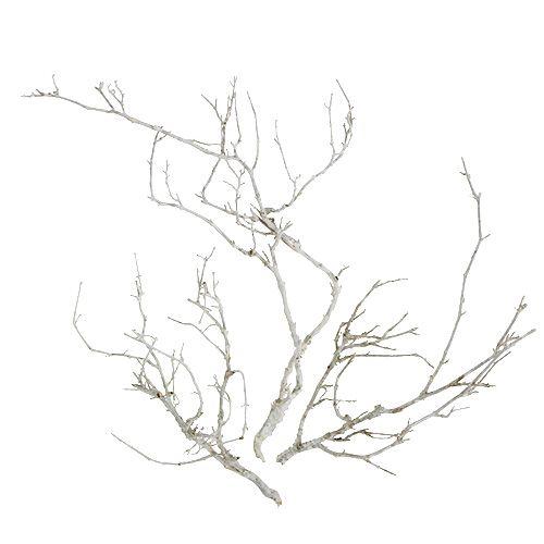 Branches séchées blanchies 500 g