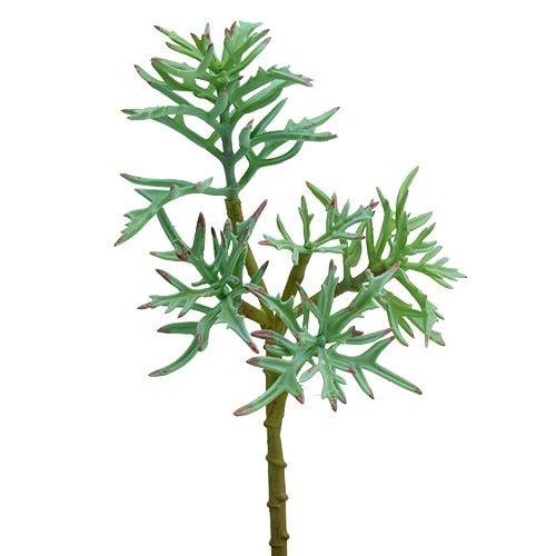 Echeveria 33 cm vert clair
