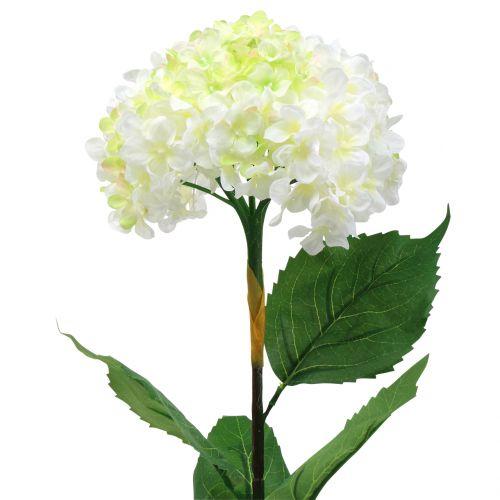 Hortensia blanc 80 cm