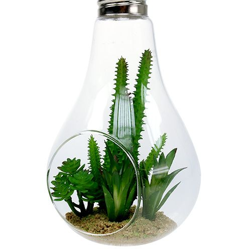 Cactus dans verre à suspedre 21cm