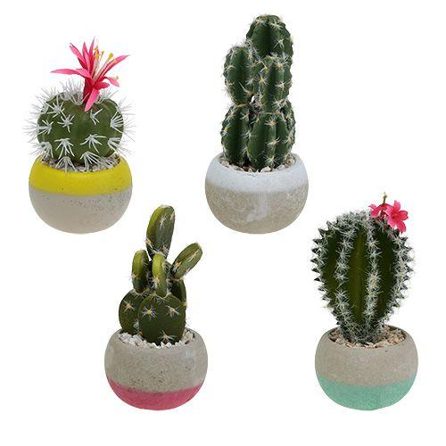 Mélange de cactus en pot H. 13 cm 4 p.