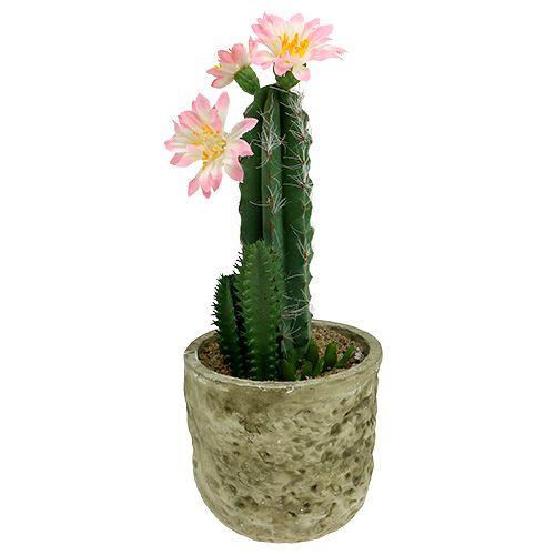 Cactus En Pot Avec Fleur Rose H 21 Cm Articles De Decoration